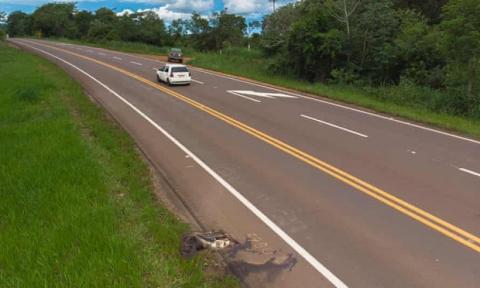 Con đường chết chóc nhất: Mỗi năm 3000 xác chết tại xa lộ tử thần của Brazil, cái giá quá đắt mà thiên nhiên phải trả vì con người - Ảnh 4.