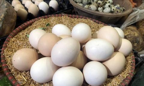 Giải mã hiện tượng trứng gà tăng giá kỷ lục, thương lái tranh nhau mua giữa tâm dịch - Ảnh 1.