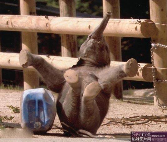 Những chú voi ngộ nghĩnh