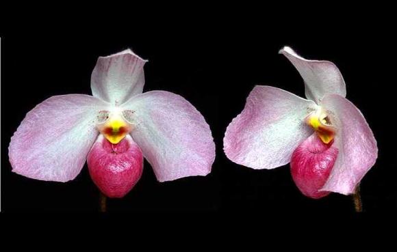 Chùm ảnh: Lạ kỳ loài hoa mang tên Hồ Chí Minh ít người biết