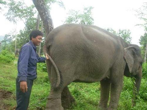 Phút kinh hoàng bị voi rừng tấn công