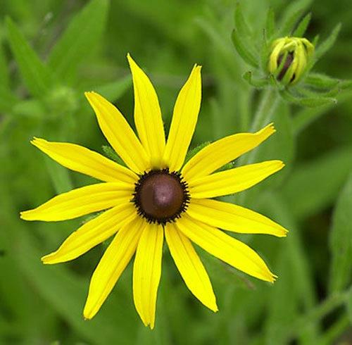 10 loài hoa quyến rũ nhất trên thế giới