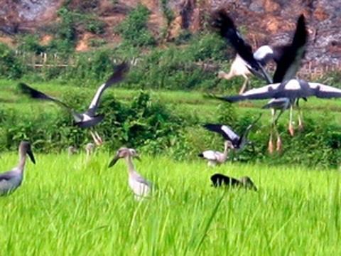 Vì sao chim lạ xuất hiện bất thường tại Việt Nam?