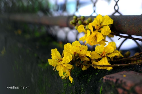 Hoàng hôn vàng màu nhớ, hoa điệp níu bồi hồi