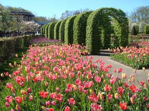 Dừng chân ở xứ sở loài hoa tulip