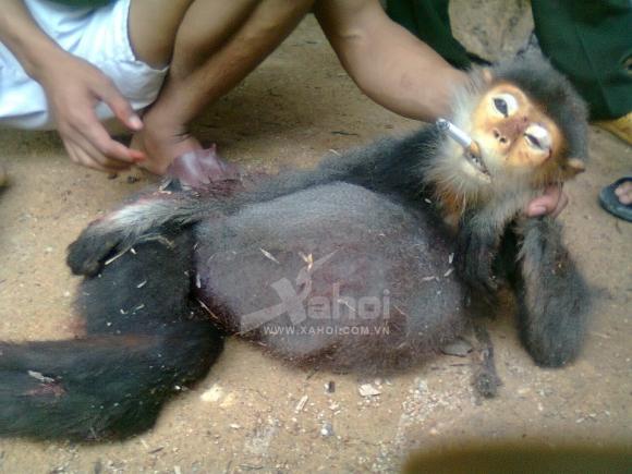 Trọn bộ ảnh giết khỉ man rợ khiến dư luận phẫn nộ
