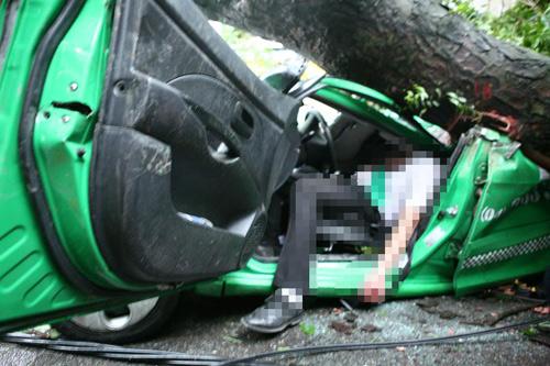 Hiện trường Taxi Mai Linh bị cây đè, tài xế tử vong