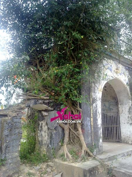 Bí ẩn con rắn vàng ở ngôi đền linh thiêng xứ Nghệ