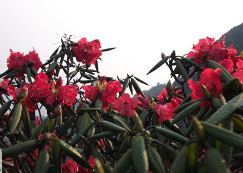 Những mùa hoa tuyệt đẹp ở miền Bắc