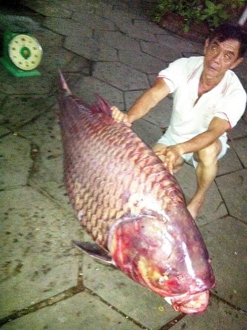 Những con cá khổng lồ sa lưới ở Việt Nam