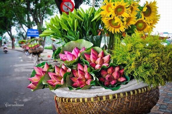 Ngày qua... - Tản văn của Nguyễn Thị Kim Nhung