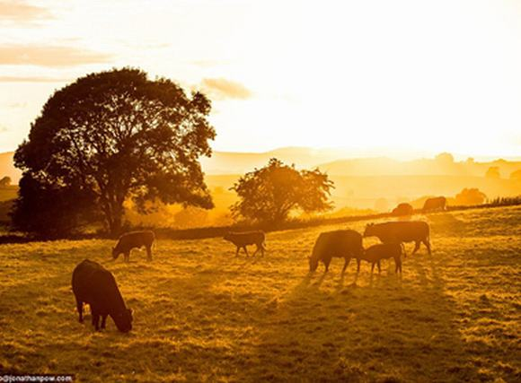 Hình ảnh đẹp 'nao lòng' của mùa thu nước Anh