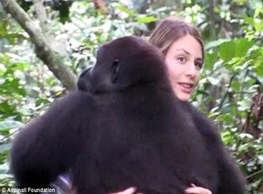 'Đoàn tụ' cảm động của cô gái với khỉ đột sau 10 năm