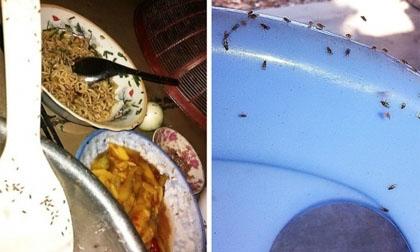 Đã xác định loại côn trùng lạ xuất hiện hàng đàn ở Bình Định