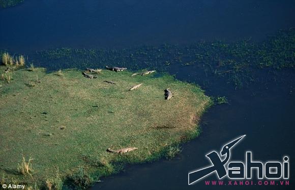 Khách du lịch hoảng hồn thấy cá sấu ăn thịt người