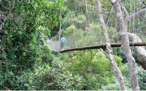 Taman Negara là cầu treo dài nhất ở Malaysia với chiều dài lên đến 530m, nằm trên đỉnh của cây cổ thụ lâu đời ở vườn quốc gia Taman Negara - Ảnh: CNN
