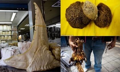 Động vật quý hiếm bị bán tràn lan bất hợp pháp ở chợ thuốc