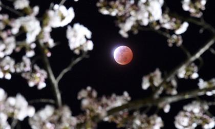 Ngắm trăng máu tuyệt đẹp trên thế giới