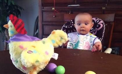 Khoảnh khắc hài hước khi em bé nhìn gà đẻ trứng