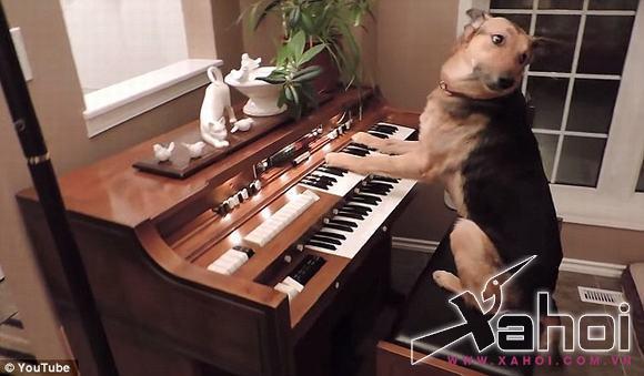 chu cho danh dan, chú chó đam mê âm nhạc, chú chó thông minh
