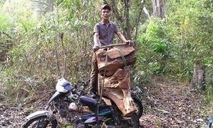 Làm rõ vụ tung ảnh phá rừng lên Facebook