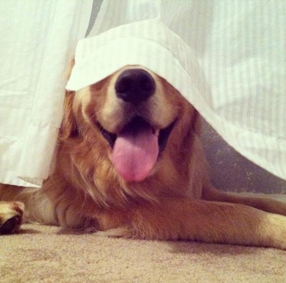 'Chết cười với những chú chó chơi trốn tìm nhưng 'giấu đầu, hở đuôi' 1
