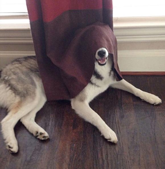 'Chết cười với những chú chó chơi trốn tìm nhưng 'giấu đầu, hở đuôi' 7