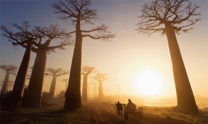 Những khu rừng cổ xưa nhất trái đất