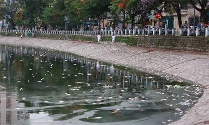 Đã thu vớt 6 tấn cá chết và làm sạch môi trường hồ Hoàng Cầu