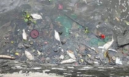Nhiều xác cá chết bất thường dạt bờ hồ Tây