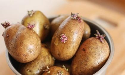 7 thực phẩm nhiều độc tố, hại sức khỏe bạn vẫn gặp hàng ngày