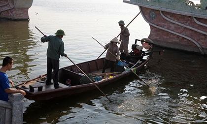 Cá chết trắng Hồ Tây: 'Nước có thể nhiễm kim loại nặng'