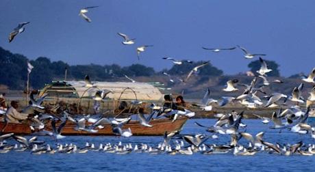 Ngôi làng bí ẩn nơi có hàng ngàn con chim bay đến 'tự sát' mỗi năm