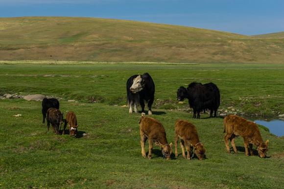Bộ ảnh đẹp mê mẩn về đất nước Mông Cổ 11