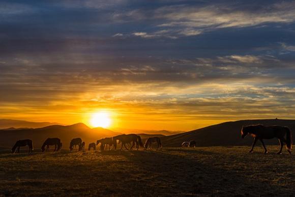 Bộ ảnh đẹp mê mẩn về đất nước Mông Cổ 8