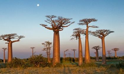 Những loài cây kỳ diệu bạn không thể tin nó tồn tại trên Trái Đất