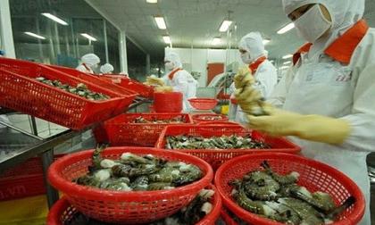 Sử dụng hóa chất cấm, nông sản Việt đang trả giá đắt!
