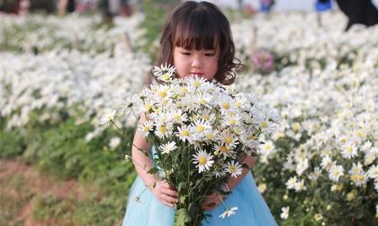 Chùm ảnh: Em bé đẹp như thiên thần bên những cánh hoa cúc họa mi cuối mùa