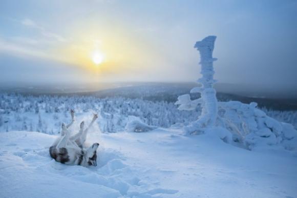 Một chú chó chơi đùa với tuyết dưới ánh nắng mặt trời. (Ảnh: Bored Panda)
