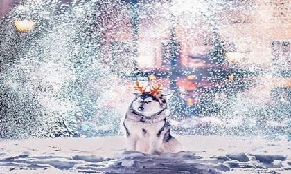 Hình ảnh lung linh của Moscow bao trùm trong tuyết và đèn Giáng sinh