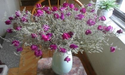 """Những """"kiêng kỵ"""" cần tránh khi bài trí hoa khô trong nhà"""