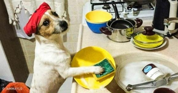 Chết cười với 15 chú chó có điệu bộ giống hệt người