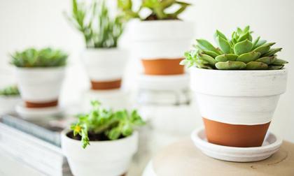 Cách làm đất giàu độ ẩm cho chậu cây trong nhà
