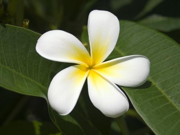 nhung-loai-hoa-phu-hop-dat-tren-ban-tho-de-nhieu-phuc-loc--giadinhvietnam.com 7