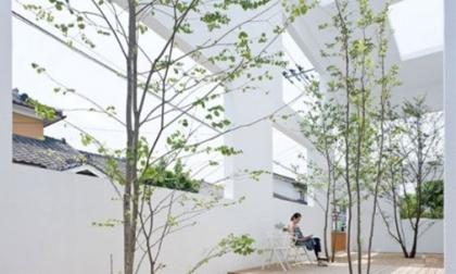 Ý tưởng thư giãn với những khu vườn trong nhà