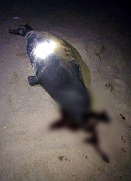 Hình ảnh chú hải cẩu bị đánh chết được chia sẻ trên mạng xã hội. (Ảnh: Facebook).