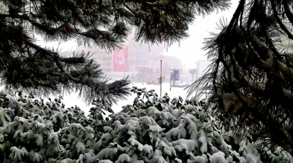 Tuyết rơi trắng xóa phủ kín cây cối ở thành phố Kraguijevac. (Ảnh: Serbia.com)