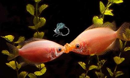 Những nụ hôn đắm đuối nghẹt thở trong thế giới động vật