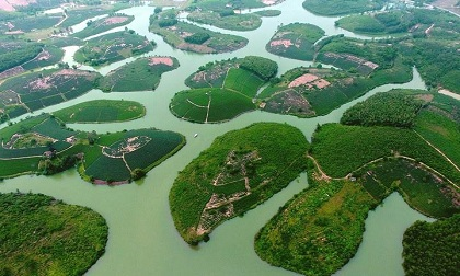 'Ốc đảo' chè xanh đẹp mê hồn giữa miền Tây xứ Nghệ