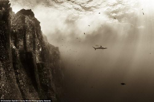 Ảnh đẹp lặng người của cuộc thi ảnh lớn nhất thế giới - 7